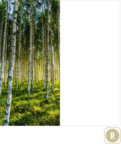Sogal-Colors-Foret