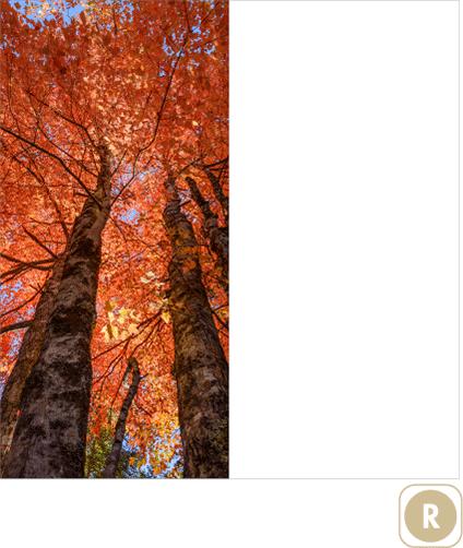 Sogal-Colors-Automne