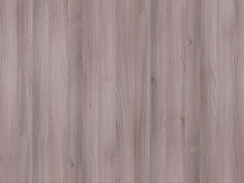 Acacia gris