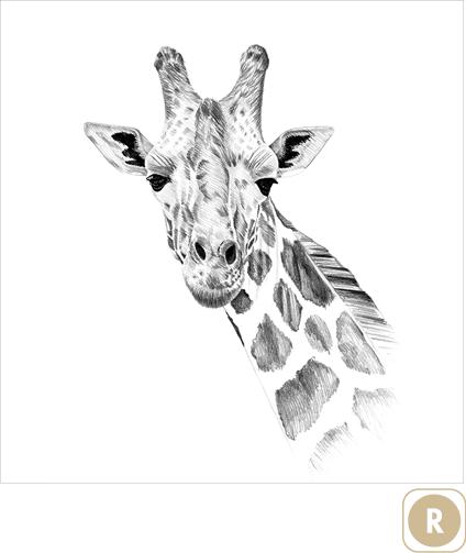 Sogal-Colors-Girafe